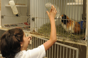 caring for Guinea Pig